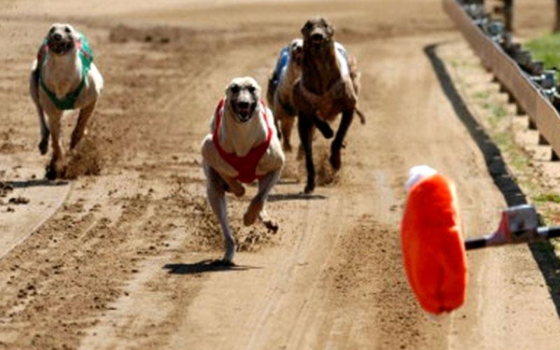 Köpek Yarışları Taktikleri Nelerdir?