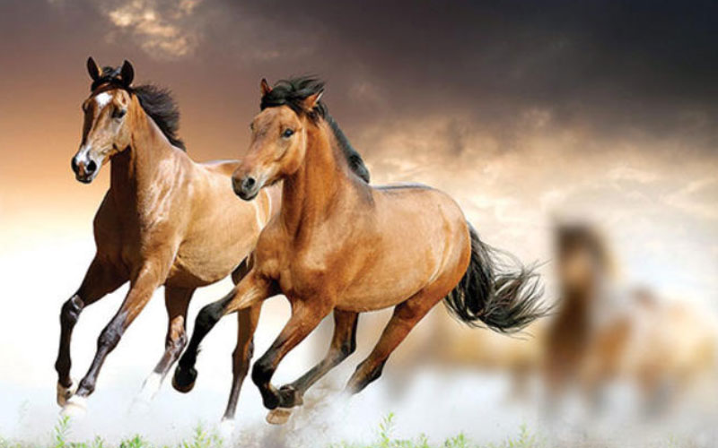 Türkiye'deki At Yarışları Nerede Yapılmaktadır?